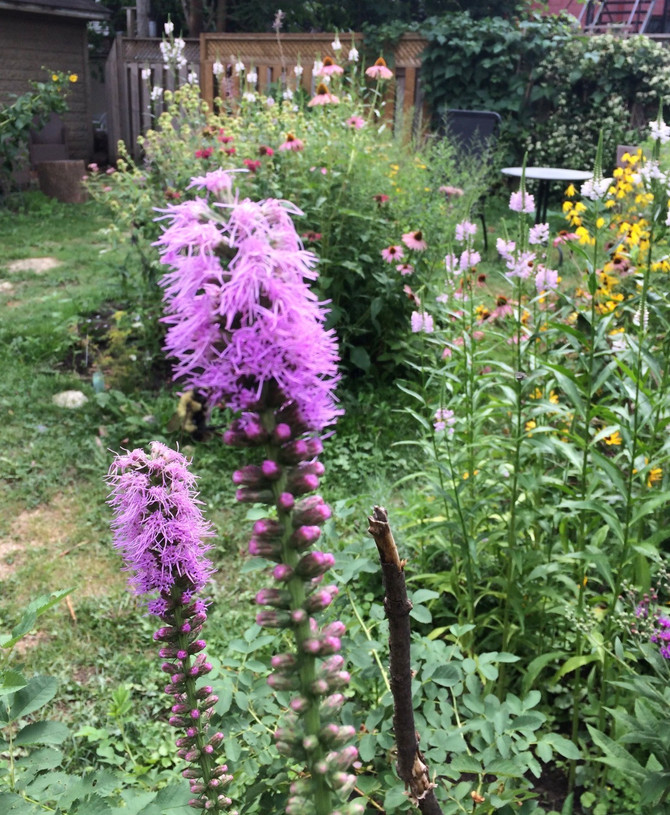 Pollinator Gardens Rx for Mental Health
