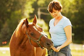 Equine Insurance   Australia