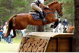Equine Insurance | Australia