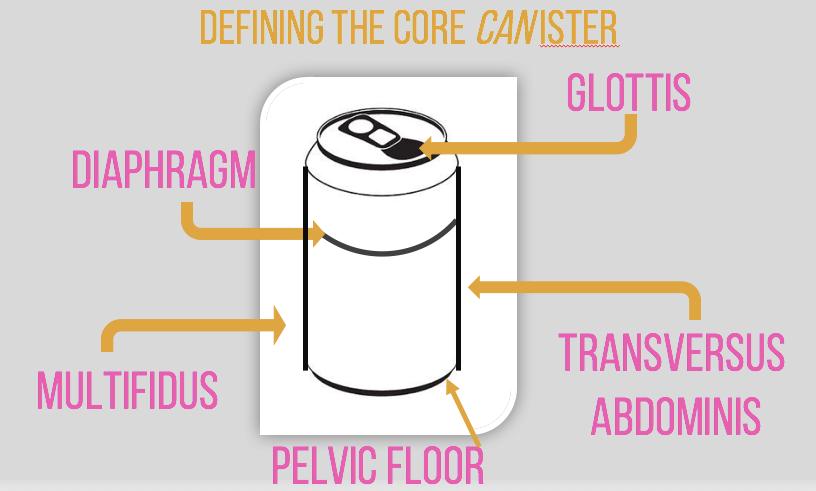 core canister, pelvic floor, abdominals, abs, pelvis, multifidus