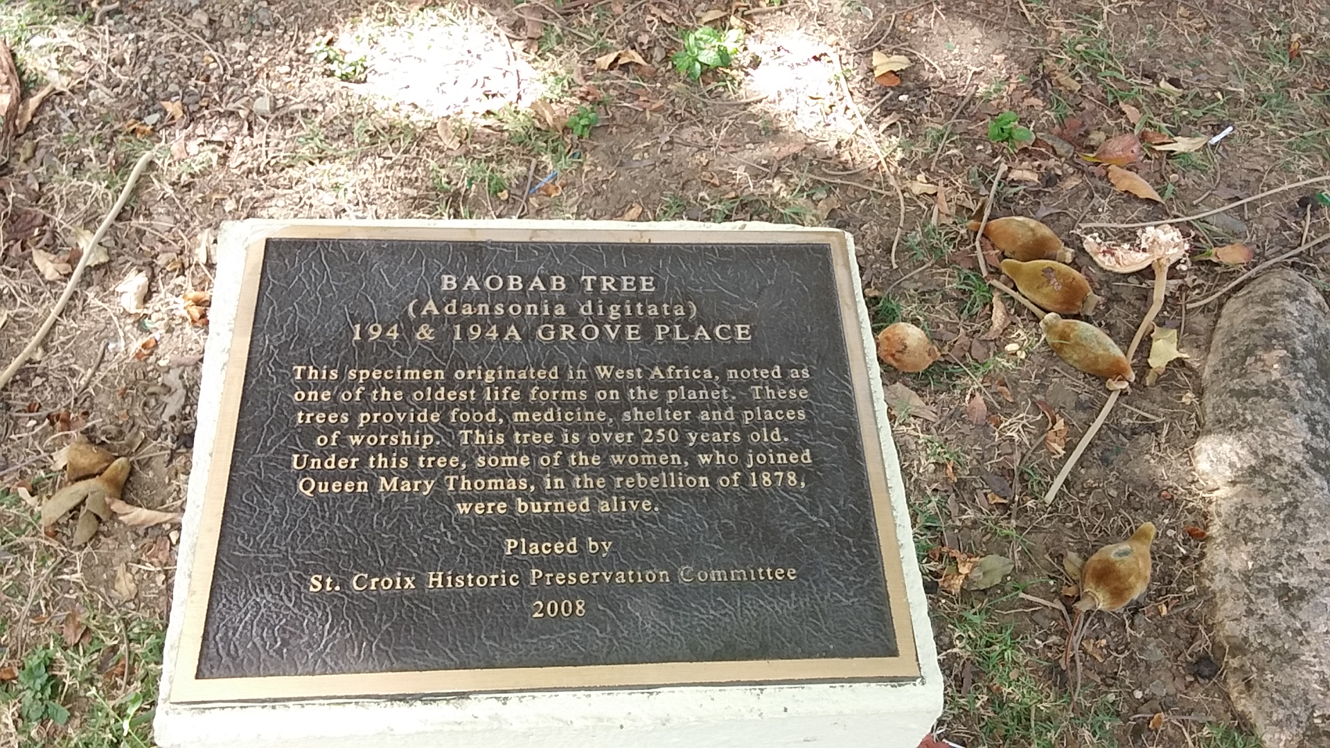 History of the St.Croix Baobab.jpg