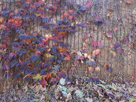 秋のアート作品🍁