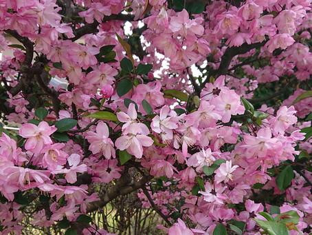 🌸春 爛漫🌸