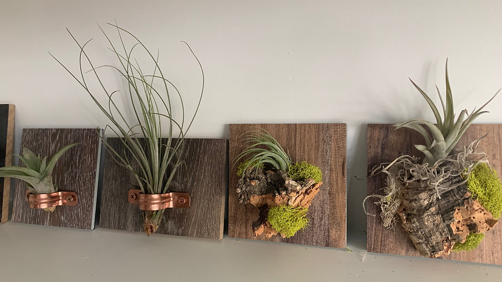 Living Air Plant Mini Displays