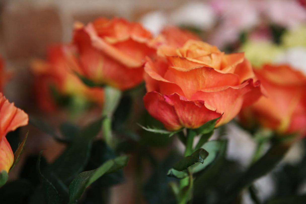 CU Flowers (2).JPG