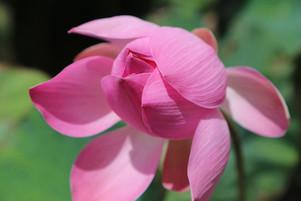 Bali Flowers (1).JPG