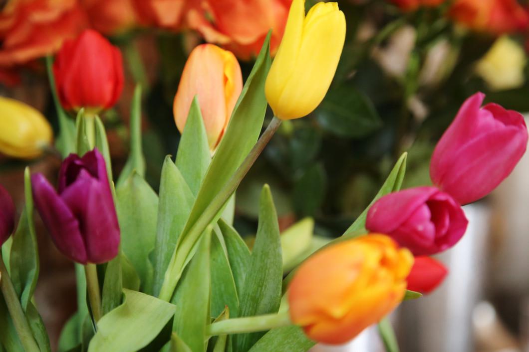 CU Flowers (1).JPG