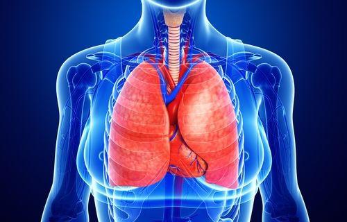 КТ органів грудної порожн. без контрасту