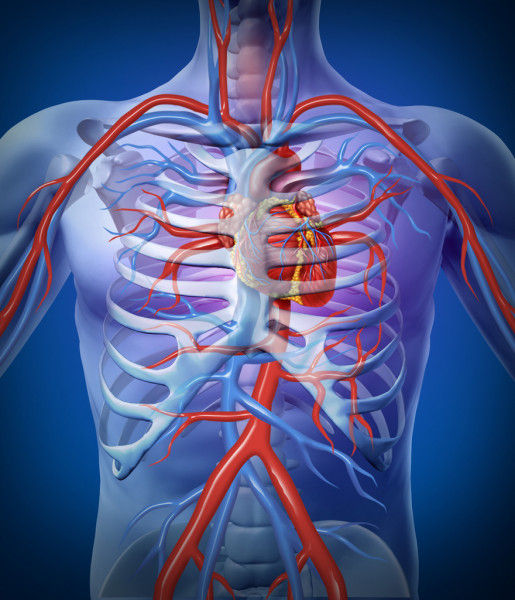 КТ-ангіографія черевного відділу аорти
