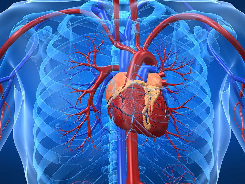 КТ-ангіографія грудного відділу аорти