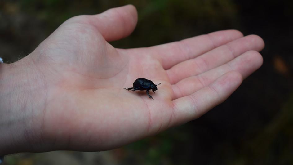 scarab hand.jpeg