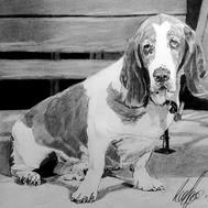 Drawing of a Basset hound dog.jpg