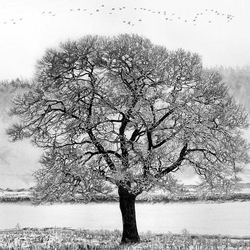 "ART PRINT | Shubie Tree | 11"" x 11"""