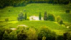 Chateau Viticole 2.jpg