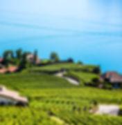 Vignes Suisses.jpg