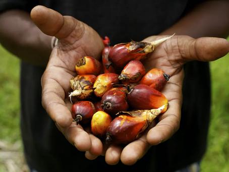 Membro do RSPO - A Focus Química garante a produção e uso sustentável do óleo de palma