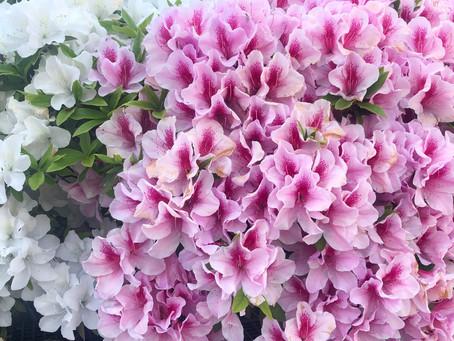 「生木に花咲くに驚く」日本の伝統美バッグにも花デザイン。