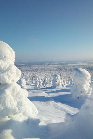 Lapland winter forest.jpg