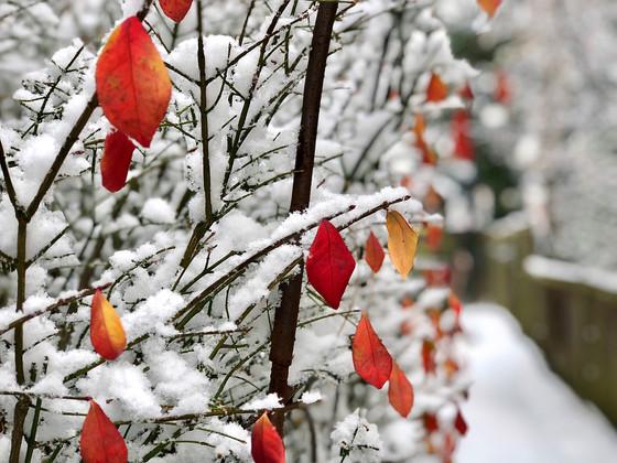 Snowflakes of Hope