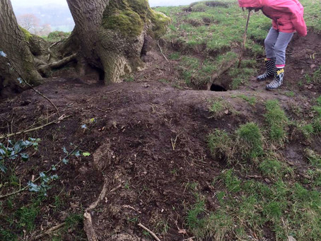 Our badger sett stake out when the MOST exciting thing happened