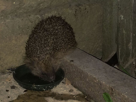Our nocturnal visitor