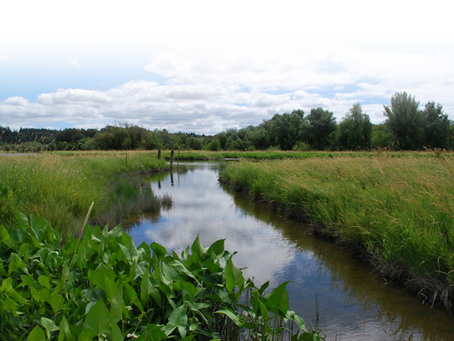 Capital Press — Farmers bank on the value of wetlands
