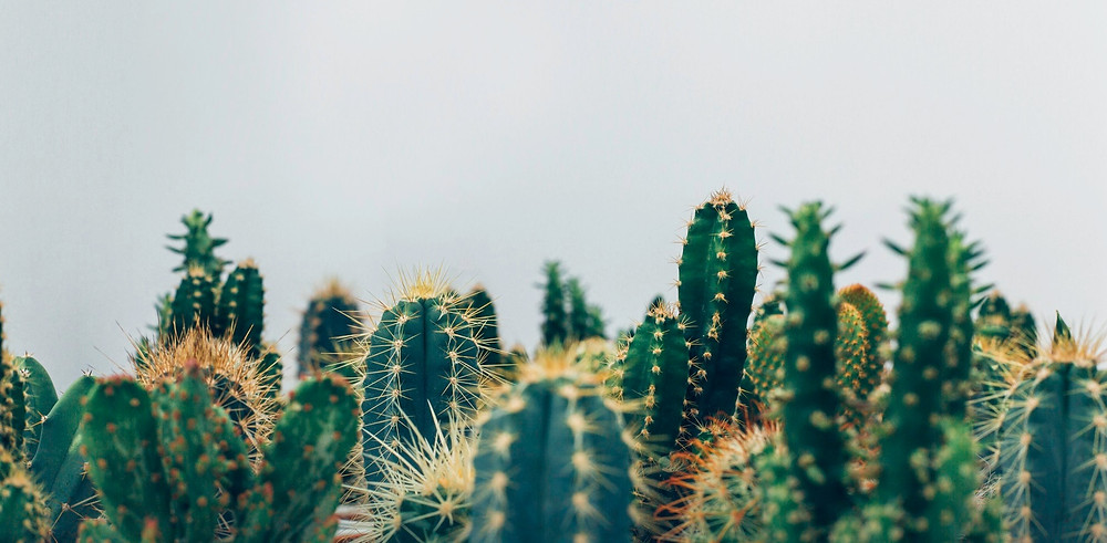 les carnets de vannes tendance vegetale deco lifestyle