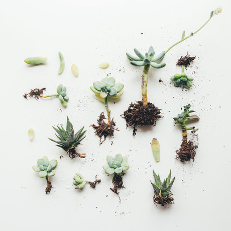 Quelles plantes en hiver ?
