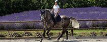 Cavalli a fine carriera, cavalli al prato, cavalli in convalescenza