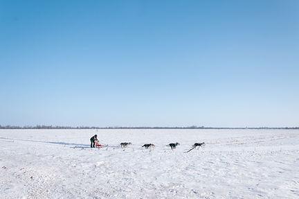 HundeSledding