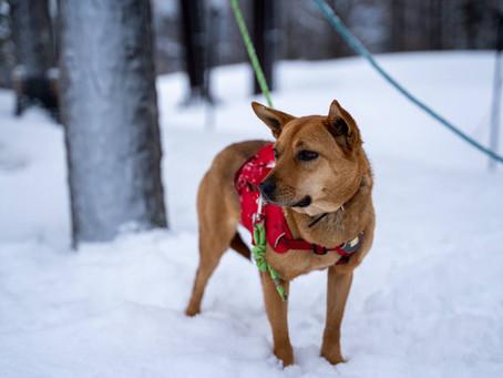 山岳遭難行方不明者捜索 捜索犬の利用について