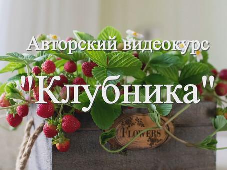 """Предзаказ на новый видеокурс """"Клубника"""""""