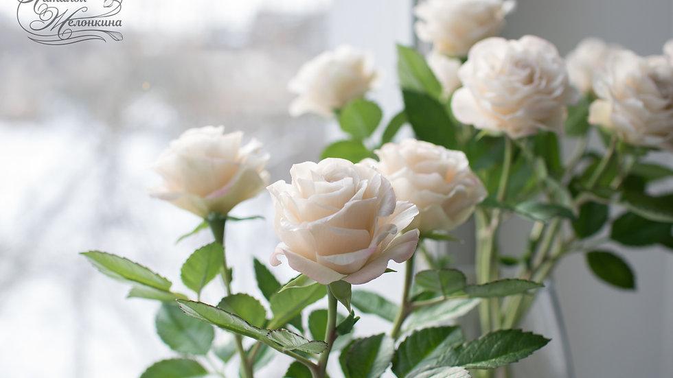 Розы пудровые