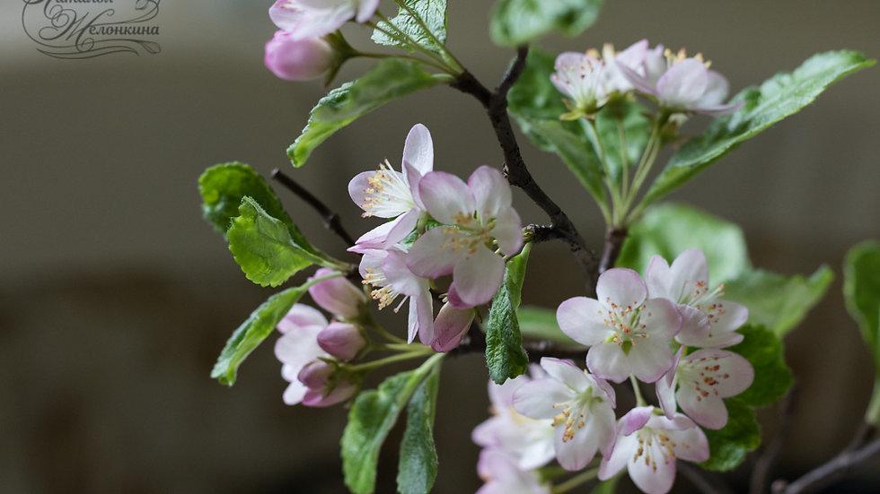 Веточка цветущей яблони