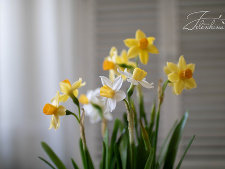 "Translation of the book ""Daffodils""."