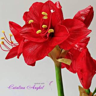 Catalina Anghel