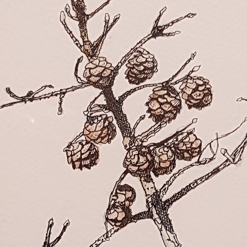 Plein-Air Branch with Cones