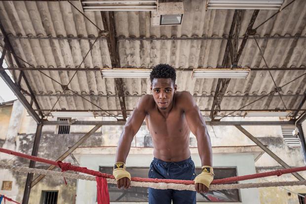 Havana boxer