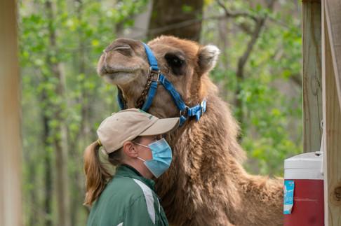 Camel & Handler
