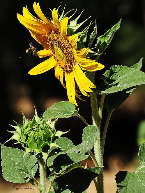 Bee's life, Sacramento, CA