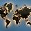 Thumbnail: Многоуровневая карта мира из фруктовых пород дерева