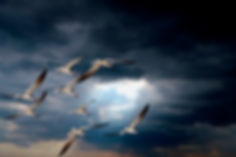skimmers storm.jpg