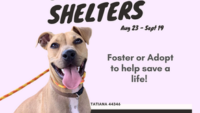 Clear The Shelters Promotions
