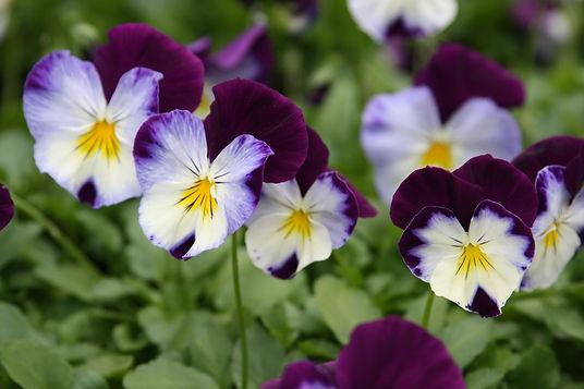 We plant flowers!