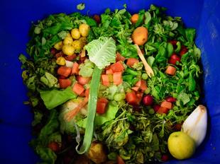 Projeto madeirense combate desperdício alimentar ajudando famílias carenciadas