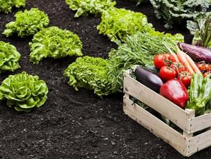 A inovação está a mudar a forma como nos alimentamos