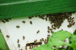 Mirada Oberta projecte abelles