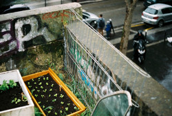 Urban gardening, above the streets