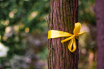 Tie a yellow ribbon around an old tree.j