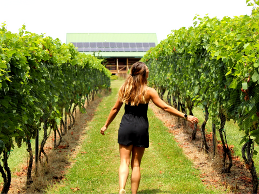Divine Llama Vineyards in East Bend, North Carolina   One Year with My Person